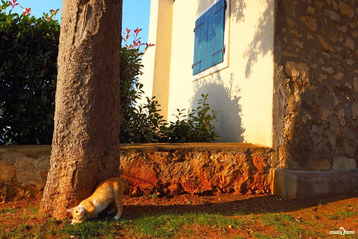 Саудади. Кот у дерева
