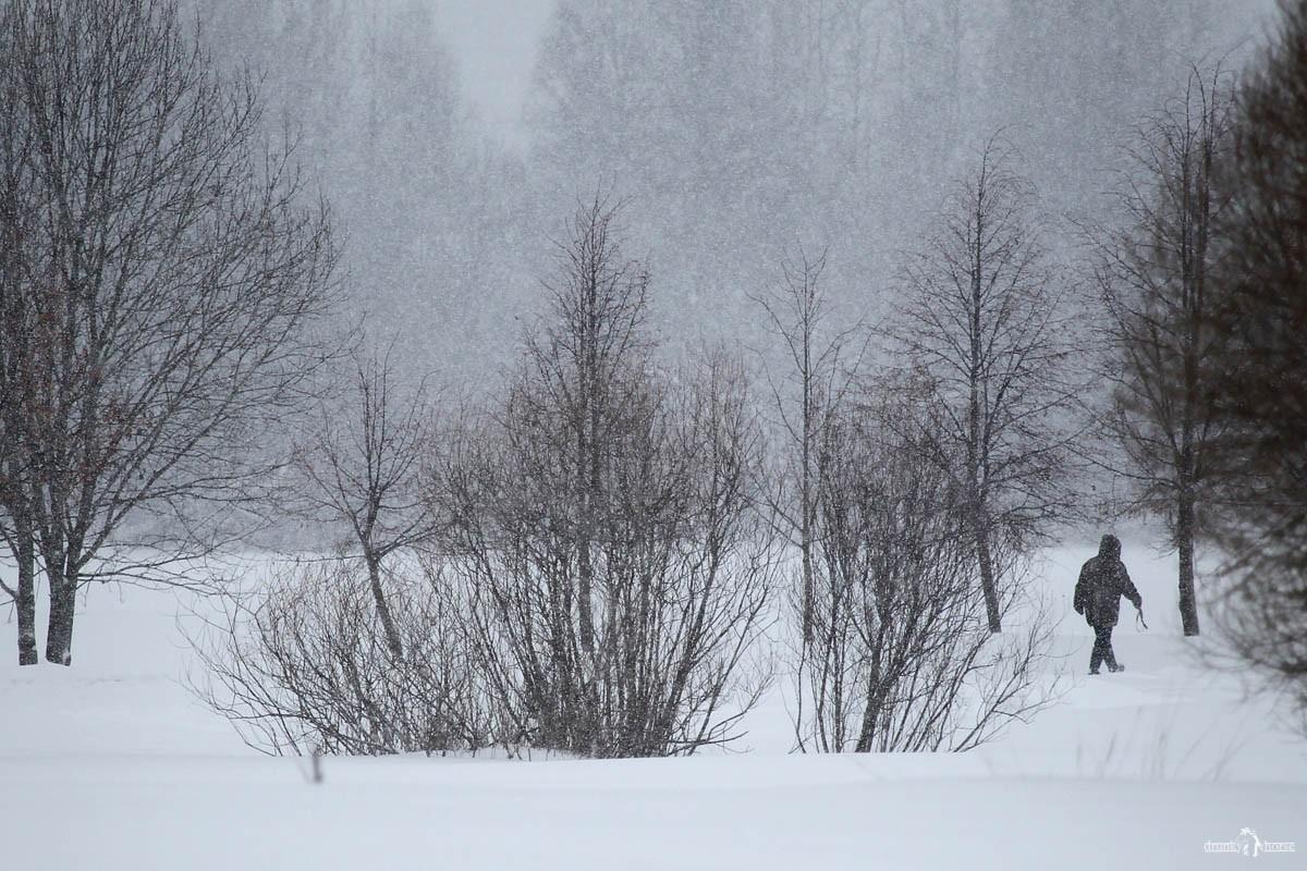 Метель в Киришах. Ленинградская область